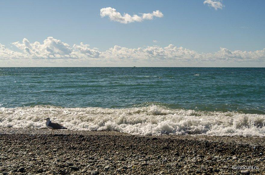 жанр, котором показать пляжи адлера в картинках его