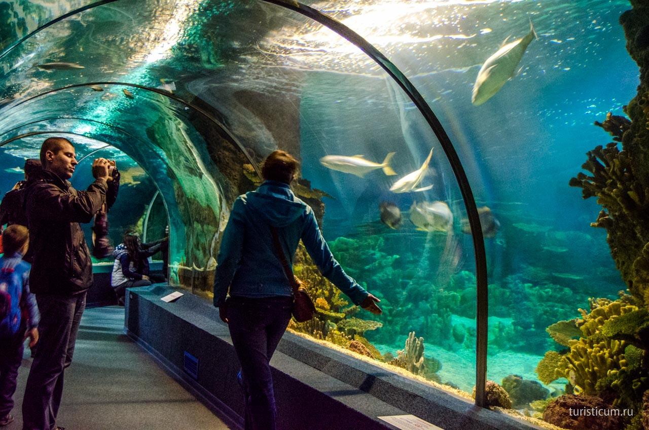 Фото в океанариуме адлер